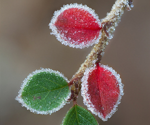 colors and winter image