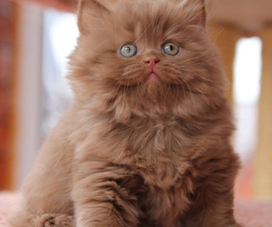 cute, animals, and cat image
