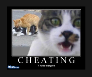 funny, cat, and cheating image
