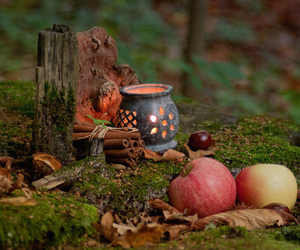autumn, apple, and forest image