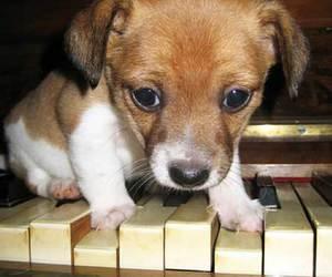 dog, piano, and cute image