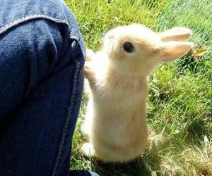 cute, bunny, and aww image