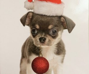 christmas, puppy, and santa claus image