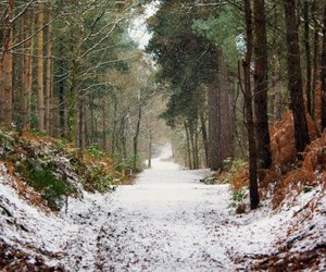 snow, forest, and winter image