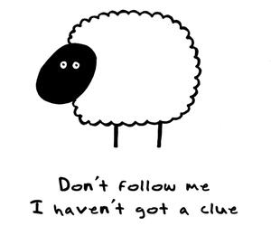 sheep, follow, and text image