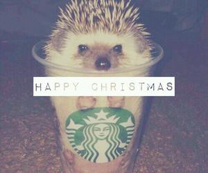 christmas, hedgehog, and starbucks image