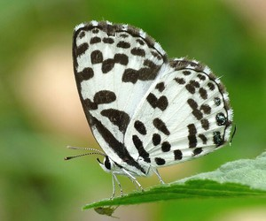 black, butterfly, and white image