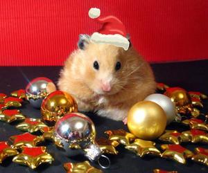 animals, christmas, and x-mas image