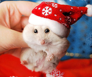 animal, cute, and christmas image