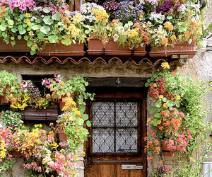 flowers, door, and house image