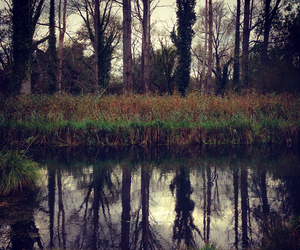 nature, autumn, and mirror image