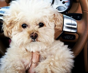 ashley tisdale, puppy, and beautiful image