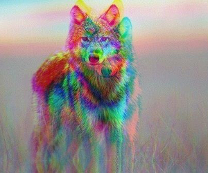 wolf, animal, and 3d image