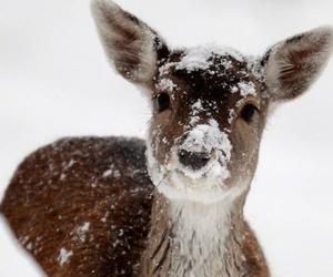 snow, animal, and cute image