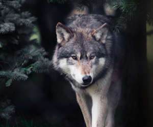 animal, dark, and tree image