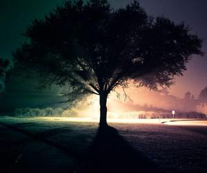 dark, lights, and tree image