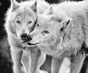 animals, black and white, and dark image