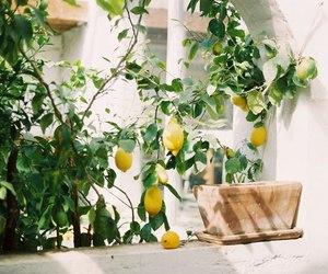 lemon, theme, and yellow image