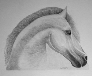 animal, indie, and sketch image