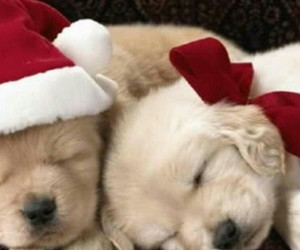puppy, christmas, and cute image