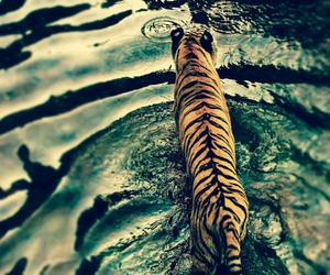 animal, water, and beautiful image