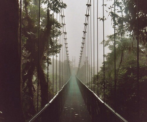 bridge, nature, and tree image