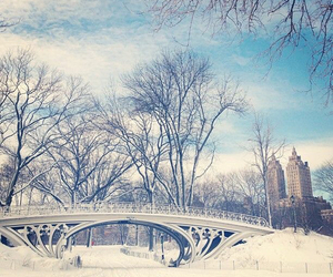 snow, nature, and new york image