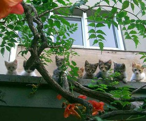kittens, outdoors, and cute image