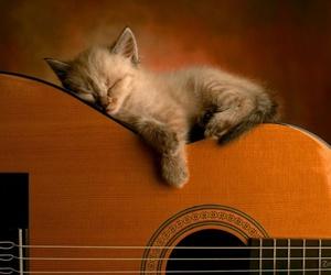 baby, kitten, and music image