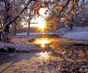 beautiful, trees, and scenery image
