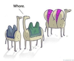 funny, camel, and whore image