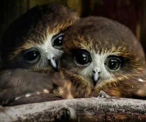 owl, bird, and animal image