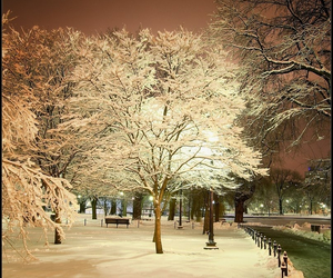 tree, snow, and boston image