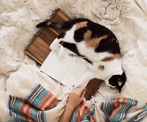 cat and bed image