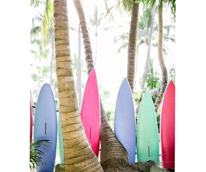 palm trees and surfboards image