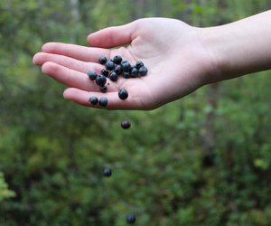 berries, blueberry, and candle image