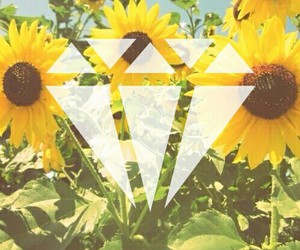 flowers, sunflower, and summer image