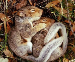animals, couple, and so cute image