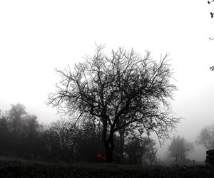 autumn, black and white, and fog image
