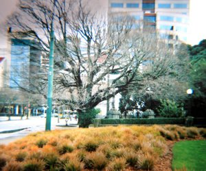 diana, lomography, and nz image