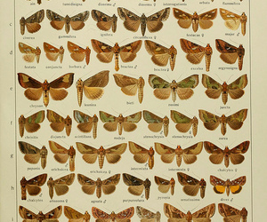 butterflies, butterfly, and butterfly' image