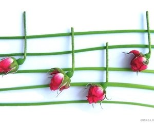 music, rose, and note image