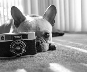 black and white, home, and pet image