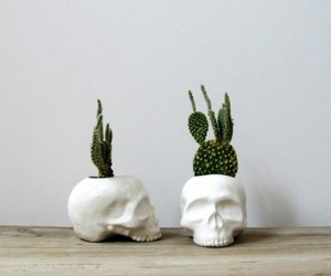 skull, cactus, and decor image