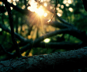 nature, tree, and sun image