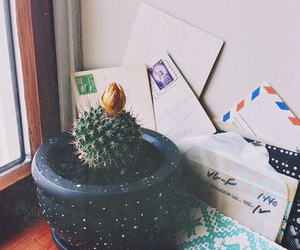 cactus, letters, and plants image