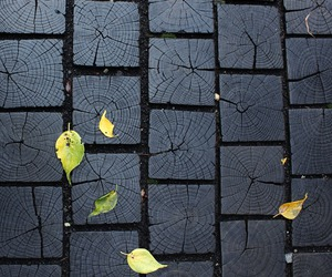 black, leaves, and photography image