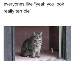 funny, sick, and cat image