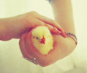 Chick, photography, and cute image