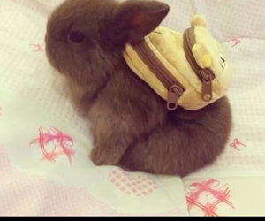 adorable, backpack, and bed image